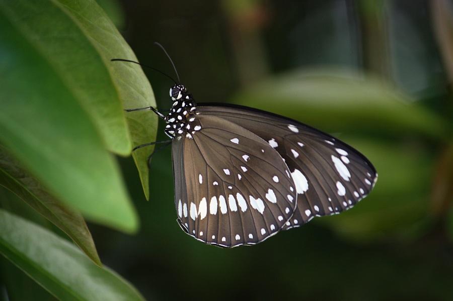 butterfly-686117